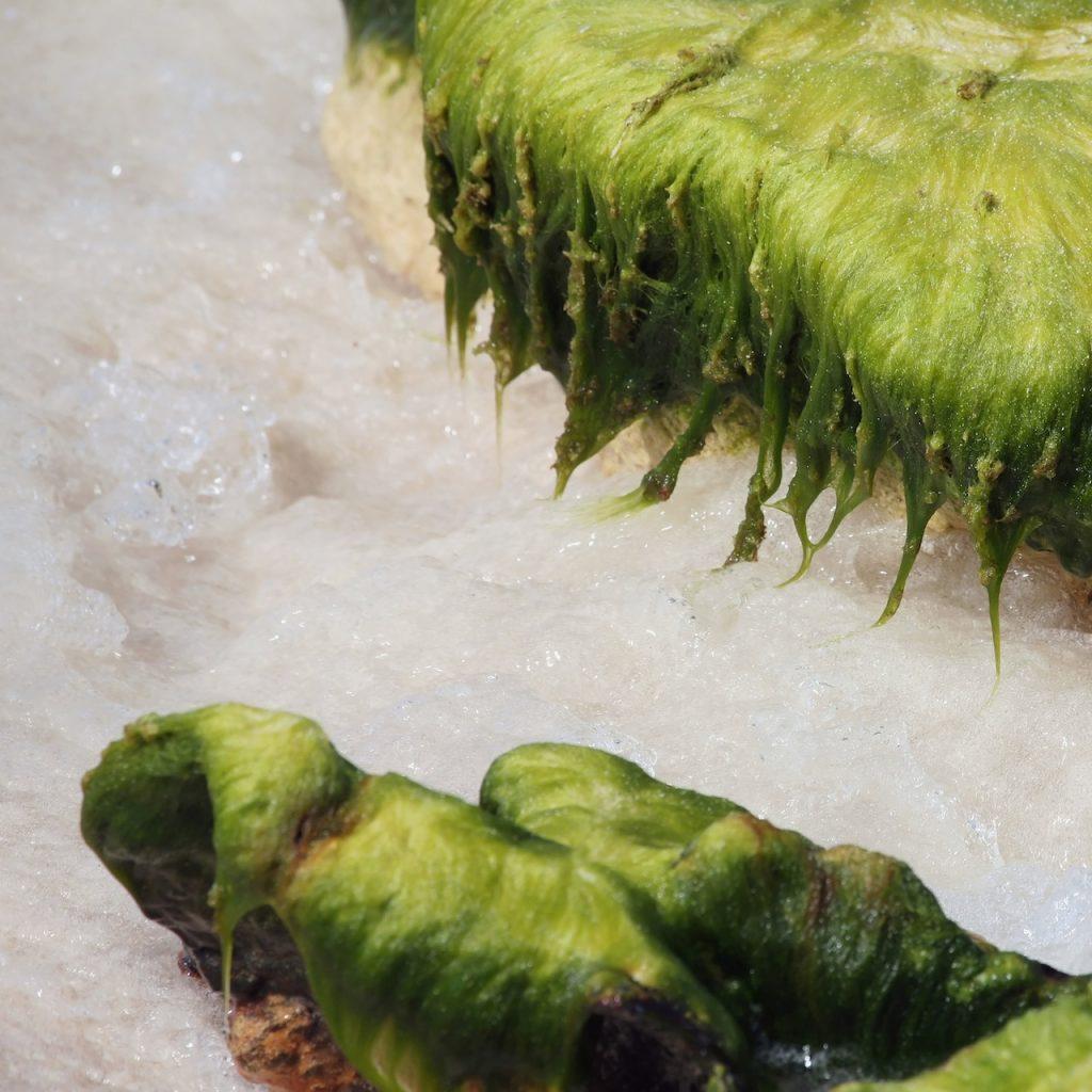 Seaweed passage