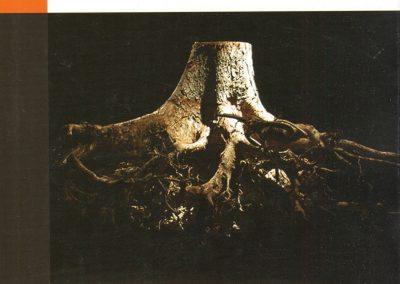 boek Jolande Wood162